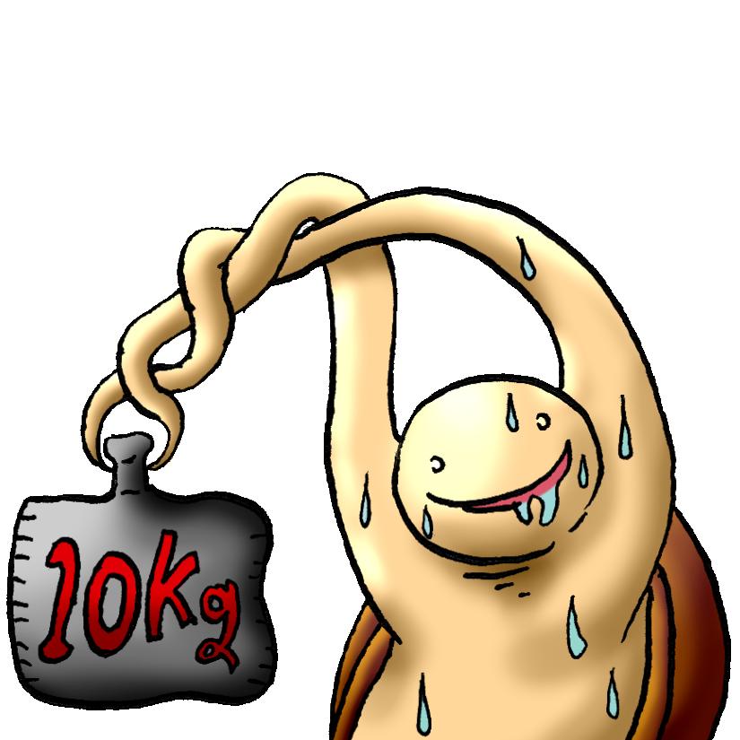 亀10キロ