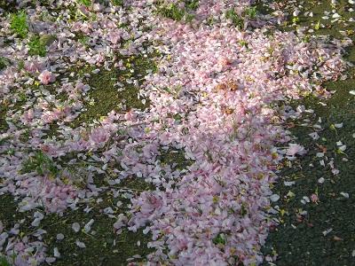 八重桜散った後