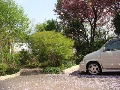 八重桜散る