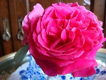?咲いた花