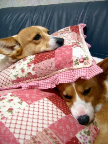 む・む・む・・・寝む・・・むにゃむにゃ・・・