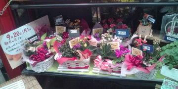 花の千本1