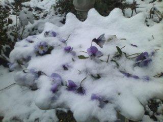 snowgarden3