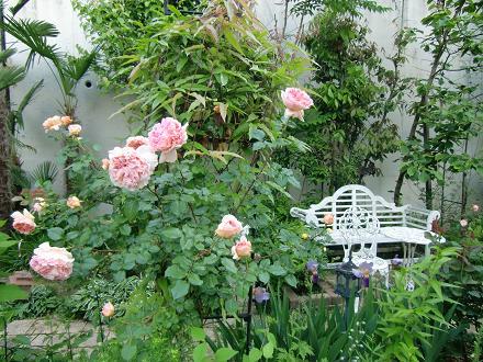 rosegarden2011