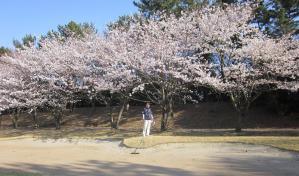 桜咲く2 005