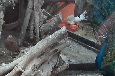 ミニミニ動物園