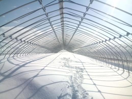 20100319_3番ハウスの雪のピーク