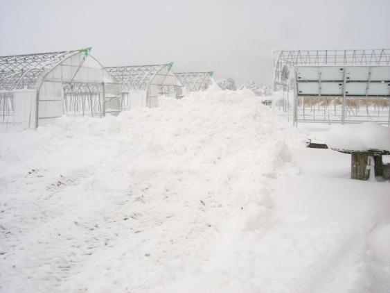 20101129_フロントショベルで排雪