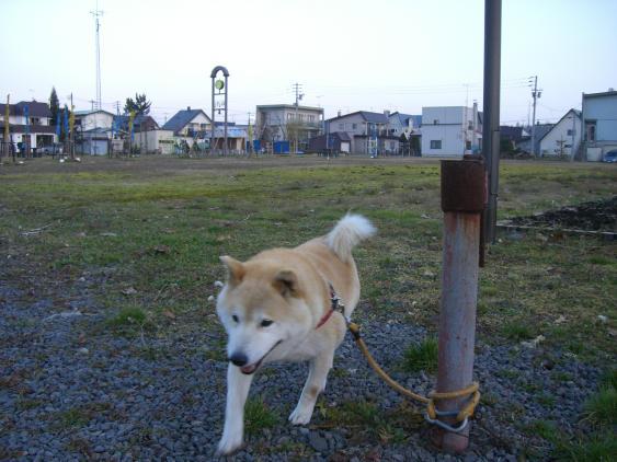 20101121_大ちゃんと鷹栖を散歩