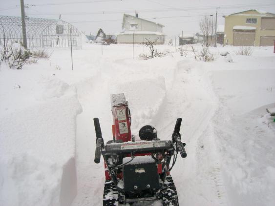 20101129_除雪1