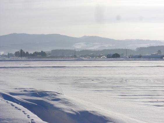 20101227_雪原