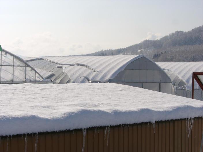 20100329_雪積もったナ.jpg