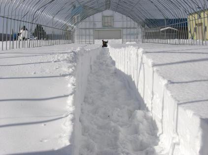 20110206_除雪1.jpg