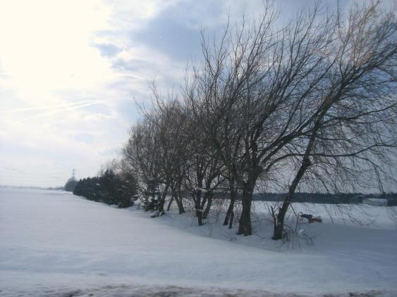 20110224_南空知の防風林