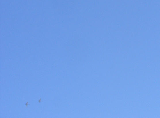 20110329_白鳥2