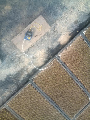 20110429_青ネギ芽が出た2