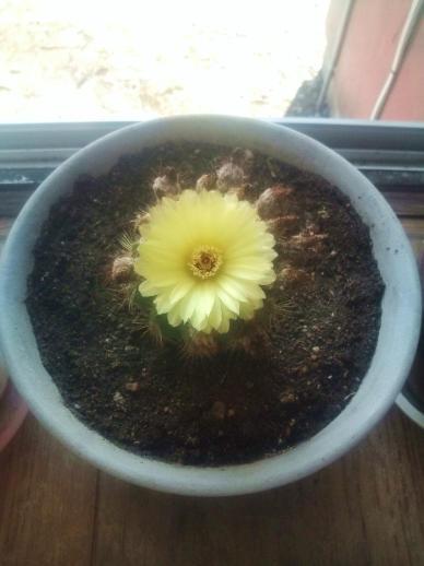 20110822_23個目の花