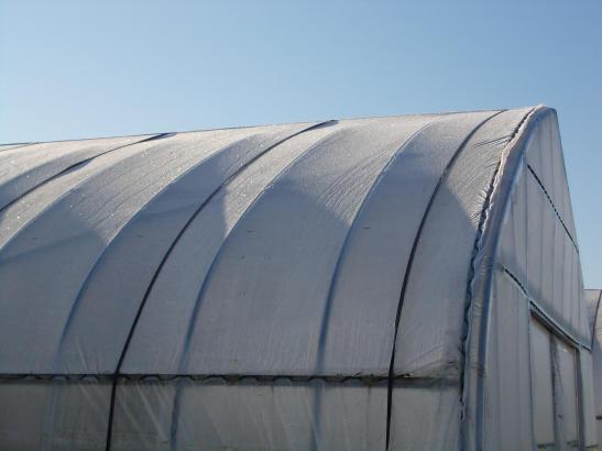 20111021_ハウスの霜