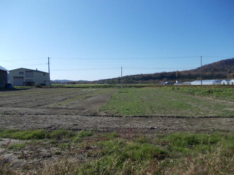 20111020_カボチャ畑の今