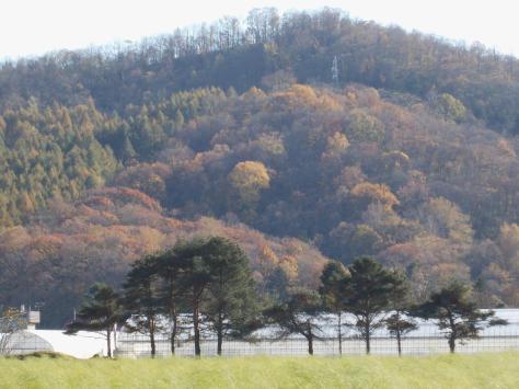 20111020_紅葉