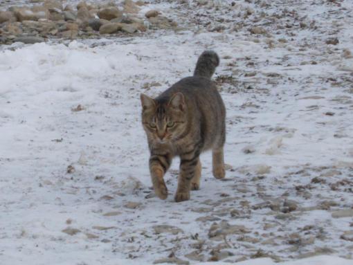 20111130_寒いのに!付いて来るトム
