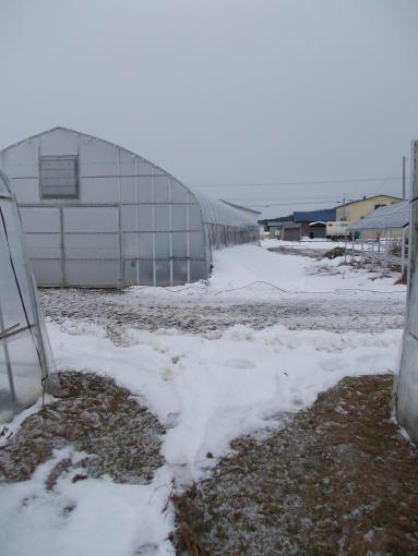 20111130_積雪減りました