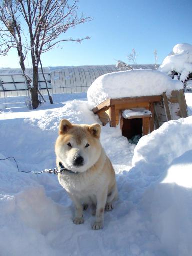 20111208_大ちゃん冬の顔
