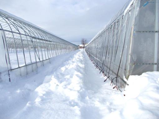 20111223_スコップで除雪後