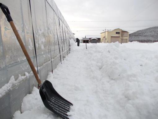 20111219_スコップで除雪1