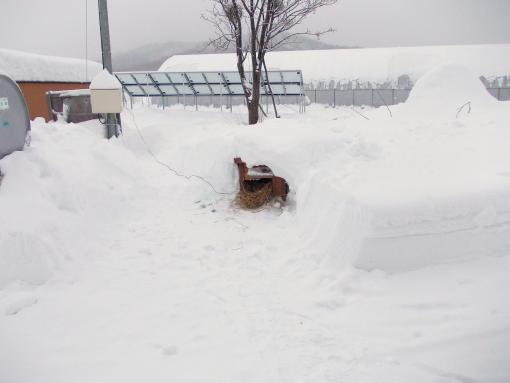 20120112_大ちゃんの小屋