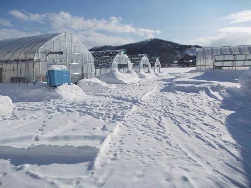 20120203_冬のハウス