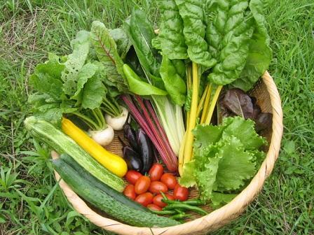 omakase野菜