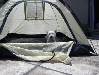 モコinテント