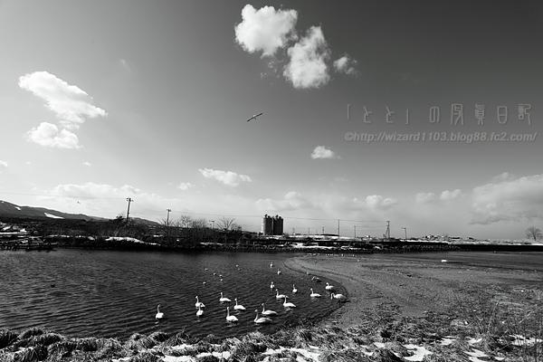 野辺地河口1