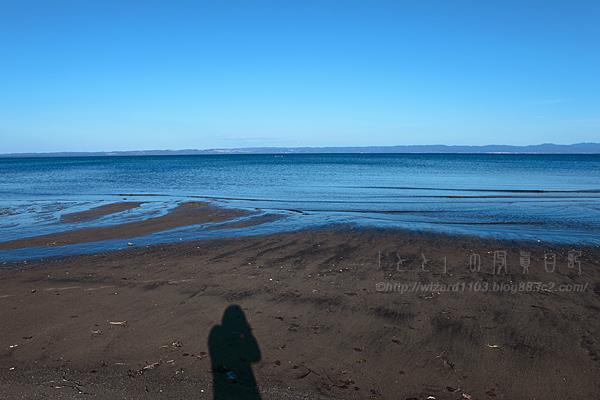 蒼い森の海