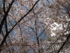 2010春散歩-2