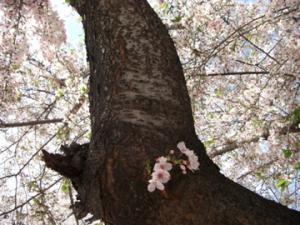 2010春散歩-4