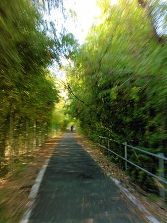 20141122_arasai1.jpg