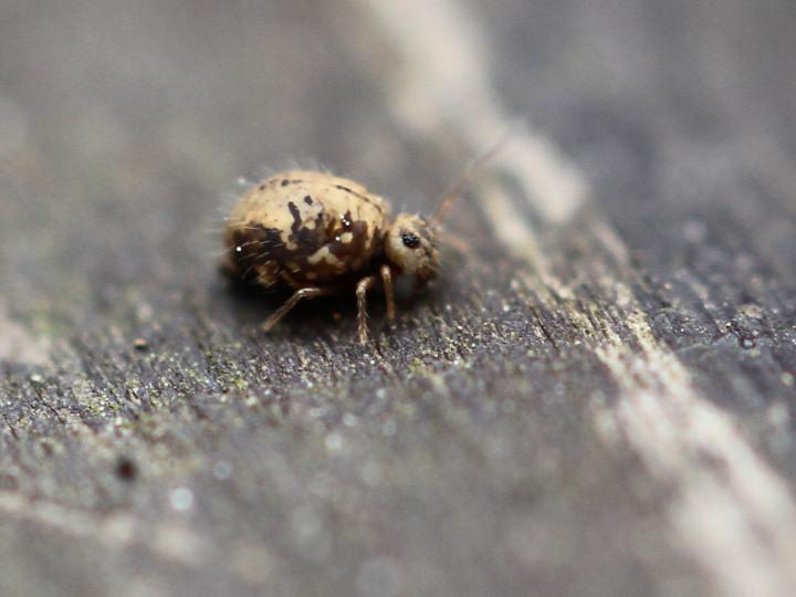 未同定の微虫-IMG_8273