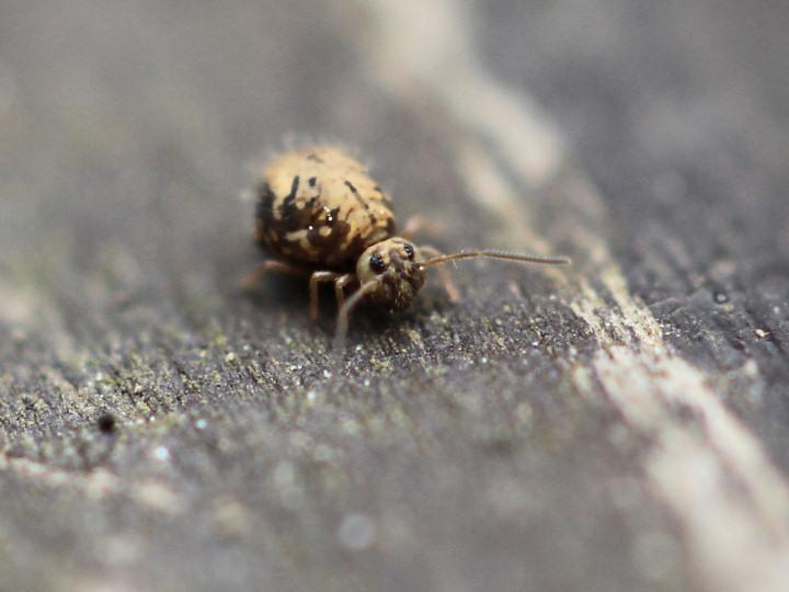 未同定の微虫-IMG_8275