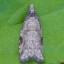 64-未>うす茶色の蛾-R0017876