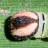 48-キマダラセセリ幼虫頭部37mm