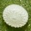 64-ヤマトシジミ卵-7D2_9506