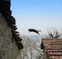 cats_that_can_640_05_convert_20120907181108.jpg