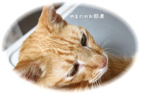 2014.10.15のチャンちゃん③