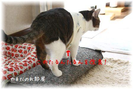 2014.10.27のスーちゃん④