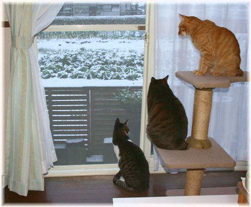 懐かしい雪を見て・・・