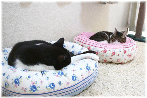 猫ベッドでスヤスヤ・・・