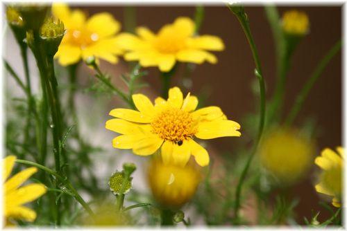 小さいお花が好きです^^