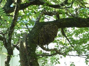 みつばちの巣